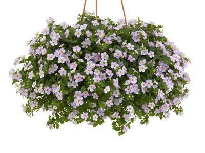 Bacopa Scopia™ Gulliver Blue